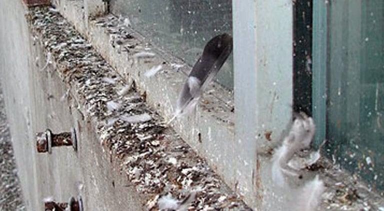 Чистка балкона после перьев и помёта